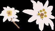 Dutjahn Sandalwood Oils